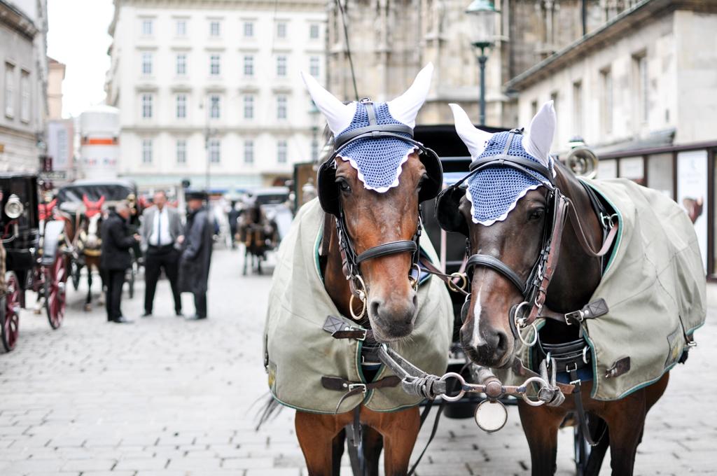 Pferde vor dem Stephansdom